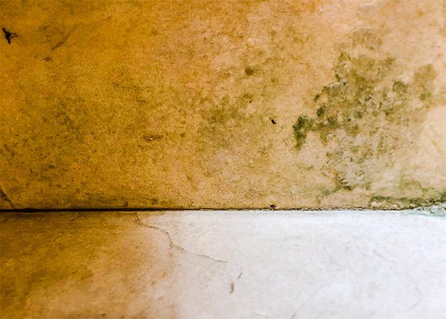 Humidity mold growth