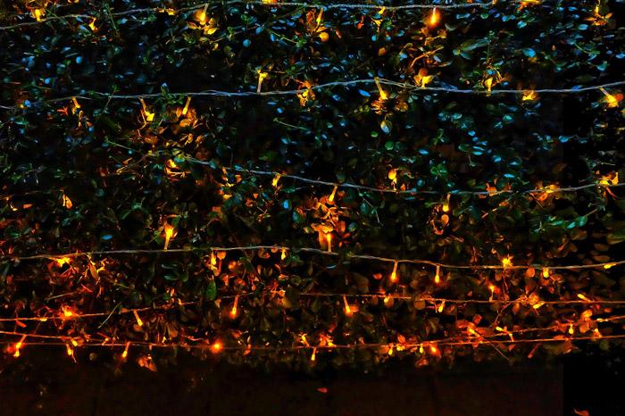 Fairy string lights