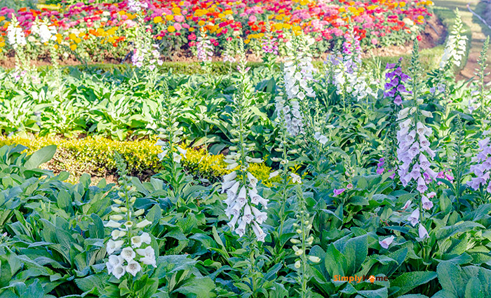 easy-care Perennials